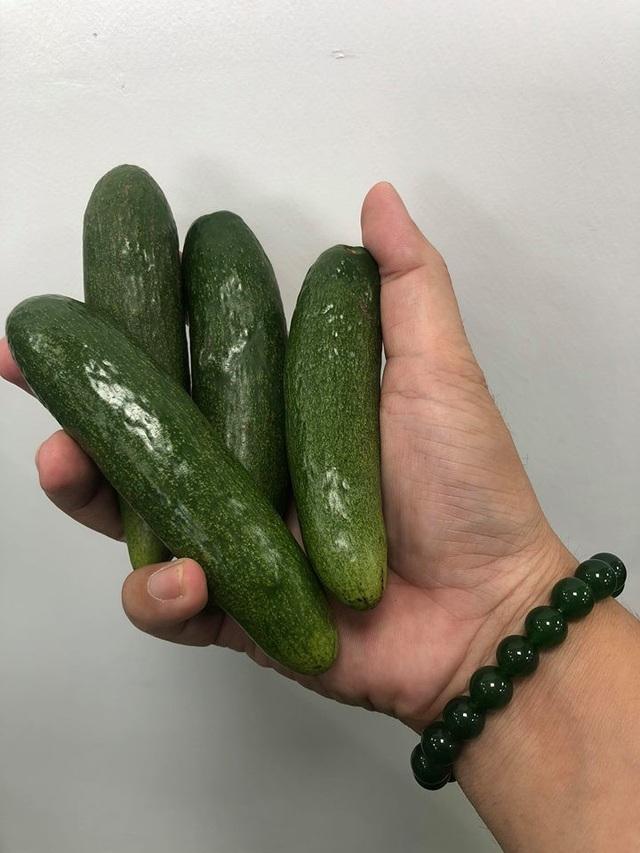Siêu bơ tí hon nhỉ chỉ bằng ngón tay được một người nông dân ở ĐBSCL trồng
