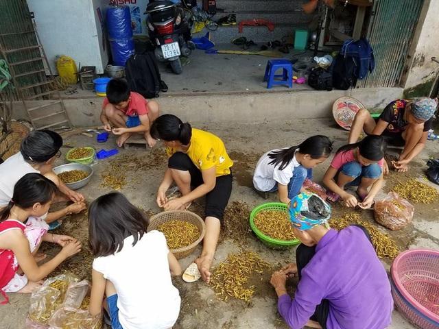 Tại 1 cơ sở sơ chế châu chấu làng Lai Xá.