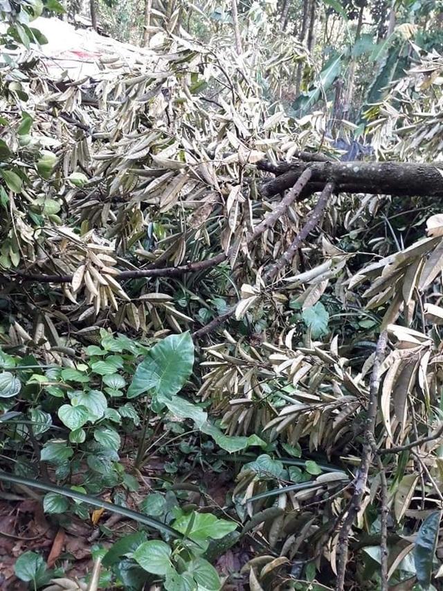 Lốc xoáy tàn phá nhiều nhà dân và làng trái cây Đại Bình - 2