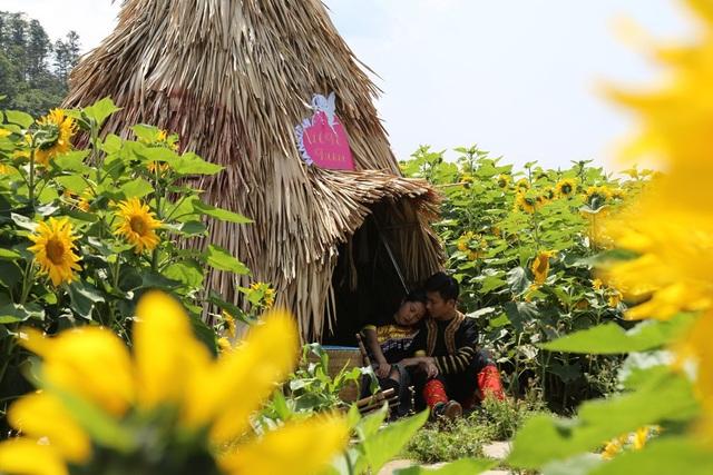 Giới trẻ đổ về Sa Pa chụp ảnh hoa hướng dương - 3