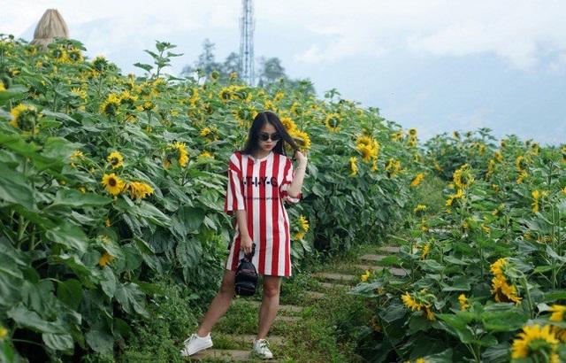 Giới trẻ đổ về Sa Pa chụp ảnh hoa hướng dương - 5