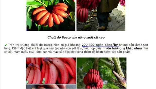 Một website bán giống chuối đỏ giới thiệu giá bán chuối này lên đến 200.000 - 300.000 đồng/kg