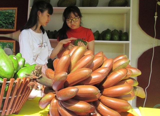 Sự thật là giá chuối đỏ chỉ ở khoảng 40.000 đồng/kg