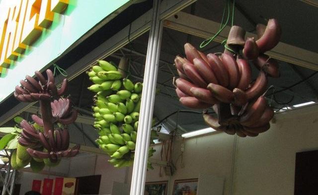 Thực hư về loại chuối đỏ 300.000 đồng/kg - 3