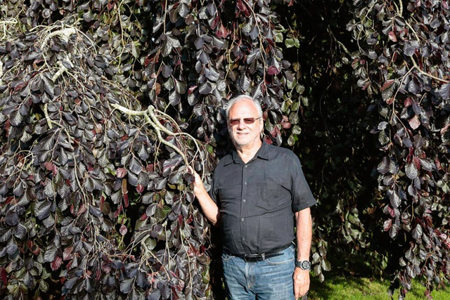 Ông Meisel chuyên sưu tầm cây sồi hiếm và bán khoảng 150.000 - 200.000 USD/cây. (Nguồn: Eric Striffler)