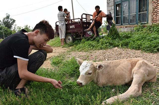 Người trong làng thường xuyên đến thăm và chơi đùa cùng con vật
