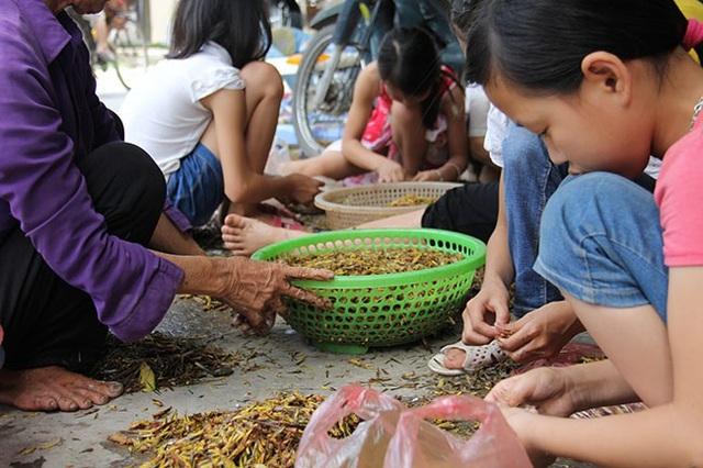 """Nguyễn Linh, 12 tuổi chia sẻ: """"Em tranh thủ nhặt cánh châu chấu để phụ giúp gia đình, cứ 1 kg châu chấu sạch là được 5.000 đồng"""""""