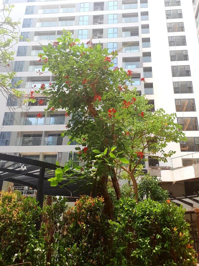 Dự án Rivera Park chiếm được cảm tình khách hàng với hệ thống cây xanh phong phú