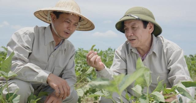 Viện Di truyền Nông nghiệp nghiên cứu giống cây đậu nành dược liệu chứa hàm lượng isoflavone cao tối ưu