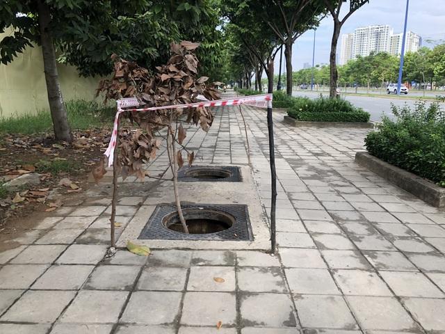 Hàng loạt nắp cống trên đại lộ đẹp nhất Sài Gòn bỗng dưng... mất tích - 1