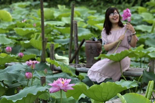 Vẻ đẹp đặc biệt của đầm sen hồ Tây mùa hoa nở - 11