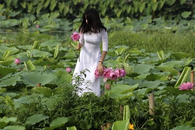 Vẻ đẹp đặc biệt của đầm sen hồ Tây mùa hoa nở - 13