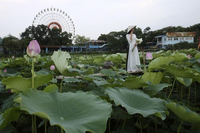 Vẻ đẹp đặc biệt của đầm sen hồ Tây mùa hoa nở - 7