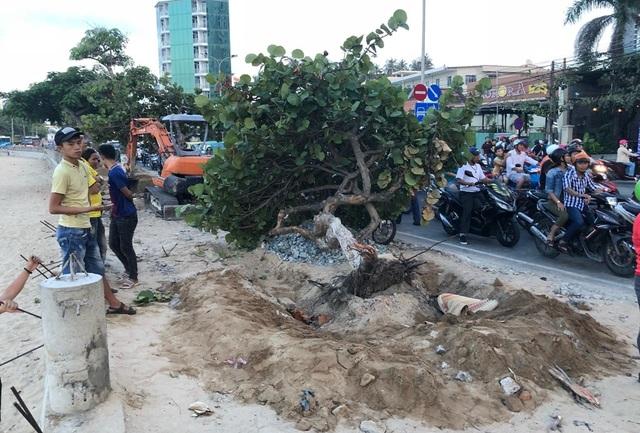 Sự việc xảy ra khi xe múc cơ động để múc một số cây xanh ở phía đông đường Phạm Văn Đồng, TP Nha Trang