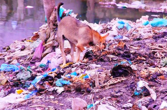 Cực hình suốt 10 năm ngửi mùi hôi thối từ bãi rác - 4