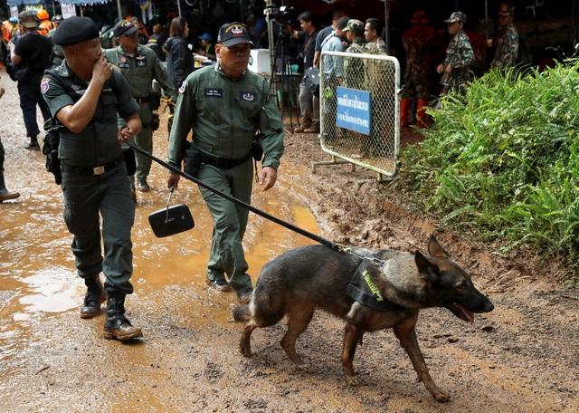 Các binh sĩ Thái Lan đã sử dụng cả chó nghiệp vụ để giúp phát hiện vị trí của đội bóng mất tích. (Ảnh: Reuters)