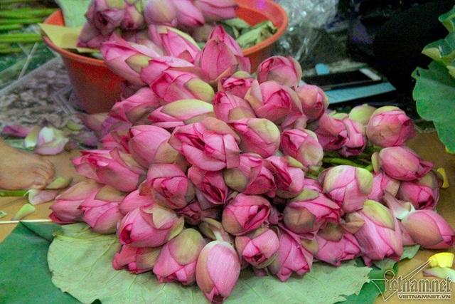 Hoa sen phải hái trước bình minh. Sen Hồ Tây có nhiều cánh xếp vào nhau, nhụy vàng thẫm, cánh hồng phớt sắc, màu hồng rất lạ, không nhạt không sẫm, hương thơm ngào ngạt