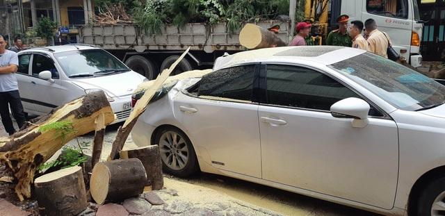 Hà Nội: Xe Lexus bất ngờ bị cây đổ đè bẹp trên phố - 5