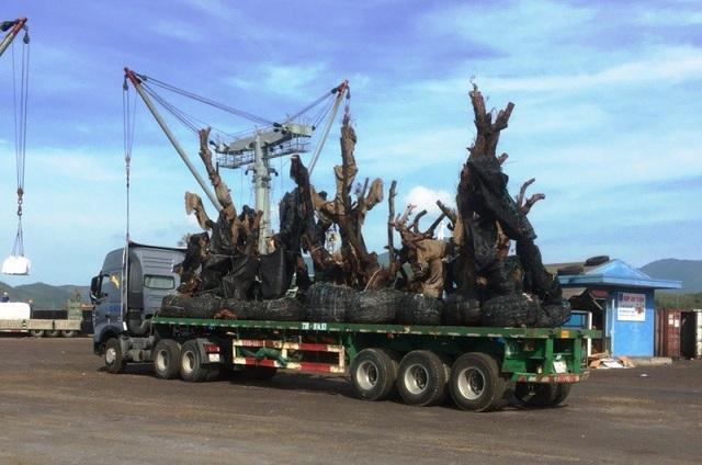 """Đường bộ bị """"soi"""" kỹ, nhiều cây """"tiểu quái thú"""" bất ngờ hạ đường thủy để vận chuyển ra Bắc"""