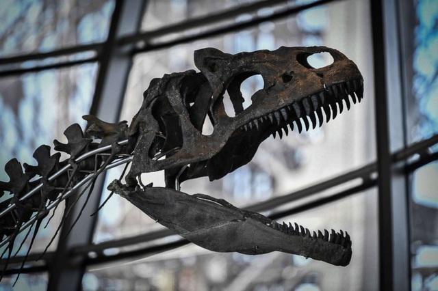Bộ hóa thạch được một đại gia ẩn danh mua với giá gần 54 tỷ đồng. (Nguồn: ABC News)