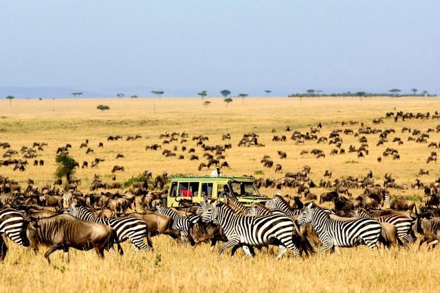 Nếu bạn muốn ngắm đàn ngựa vằn phi nước đại, hay nhìn kền kền săn mồi giữa những vách đá balsatic… thì khu bảo tồn Maasai Mara sẽ là điểm đến lý thú.