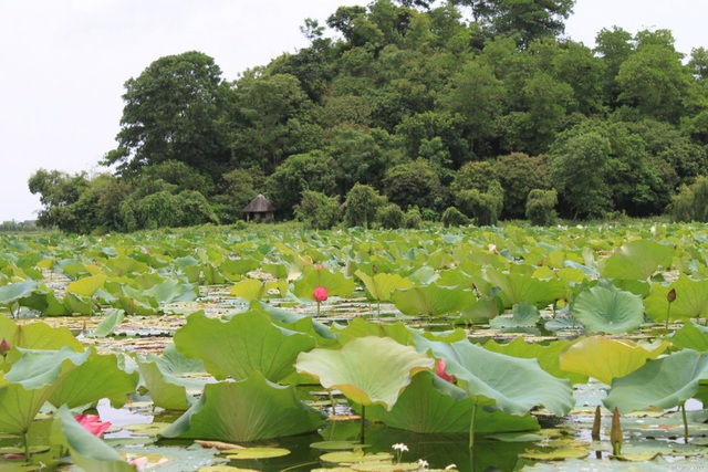 Hồ Quan Sơn được ví như Hạ Long trên cạn với khoảng 20 ngọn núi lớn nhỏ bao quanh.