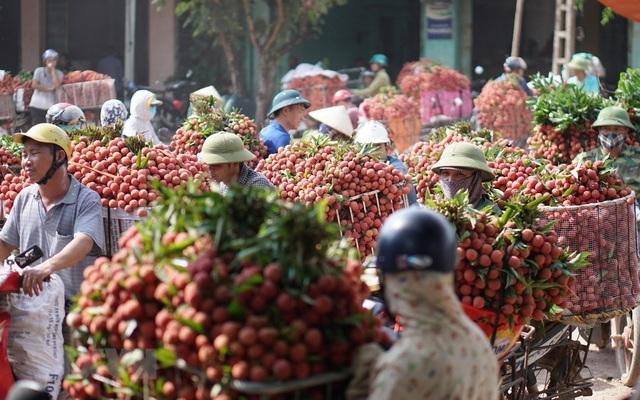 Vận chuyển vải thiều sớm đi tiêu thụ tại chợ Kim, xã Phượng Sơn, huyện Lục Ngạn.