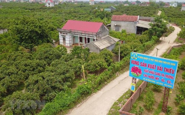 Vùng sản xuất vải thiều xuất khẩu sang thị trường các nước Mỹ, Australia, EU tại xã Hồng Giang được trồng theo tiêu chuẩn VietGAP, GlobGAP.