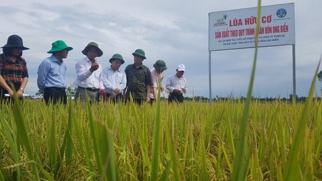 Mô hình sản xuất lúa hữu cơ cho năng suất cao