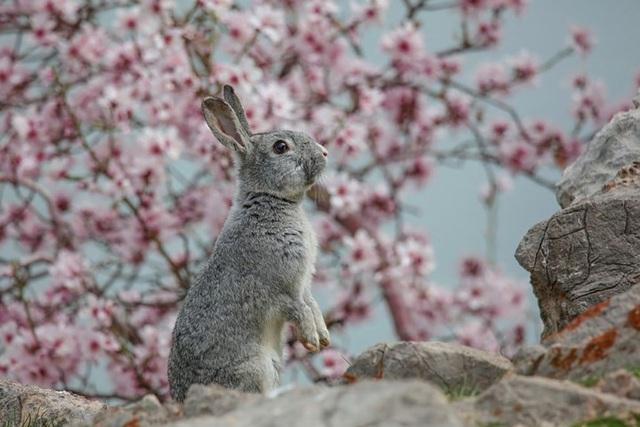 Những bức ảnh động vật đẹp mê hoặc như tranh vẽ trên toàn cầu - 13