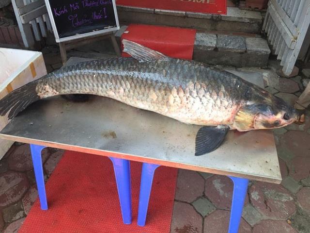 Sau đó không lâu, vào ngày 20/8/2017, một ngư dân cũng bắt được ở hồ Thác Bà con cá trắm đen nặng 42kg.