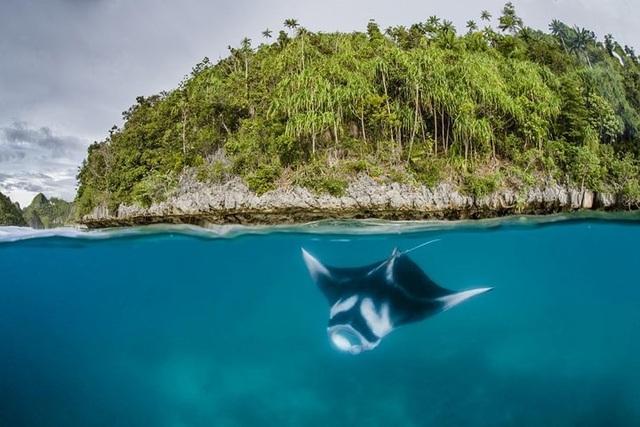Những bức ảnh động vật đẹp mê hoặc như tranh vẽ trên toàn cầu - 9