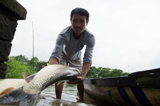 Một nông dân cầm trên tay con cá trắm nặng hơn 6kg đã chết