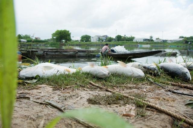 Gần chục tấn cá chết trắng trên sông Bồ - 2