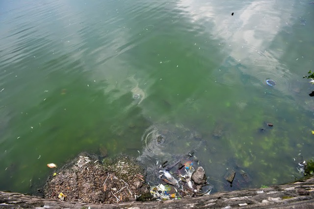 Một số khu vực gần bãi tắm, rác thải, xác cá bị cuốn trôi vào bờ bốc mùi hôi thối.