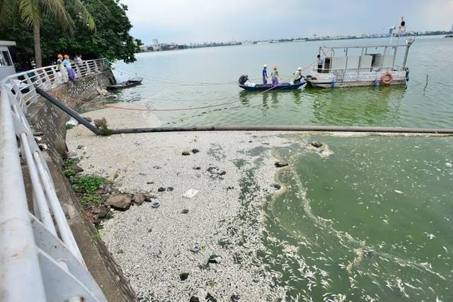 Trước đó từ chiều 8/7, cá chết trắng nổi kín mặt hồ Tây khu vực đường Vệ Hồ, Trích Sài. Theo cơ quan chức năng, khoảng 20,5 tấn cá chết đã được thu gom trong 3 ngày qua và đem đi tiêu hủy tại bãi rác Nam Sơn (Sóc Sơn, Hà Nội).