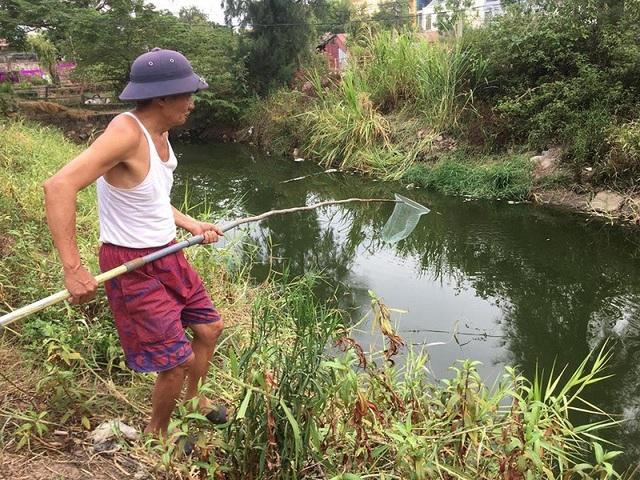 Để tránh ô nhiễm, nhiều người dân tại phường Hải Thành đã phải dùng vợt để thu gom cá chết đưa đi tiêu huỷ.