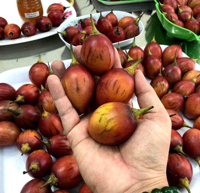 Quả cà chua này thương đối nhỏ, 1kg thường được từ 20-24 quả.