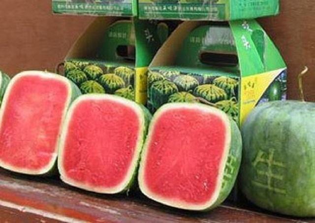 Bên trong quả dưa hấu vuông Nhật Bản có giá 4,5 triệu đồng/quả
