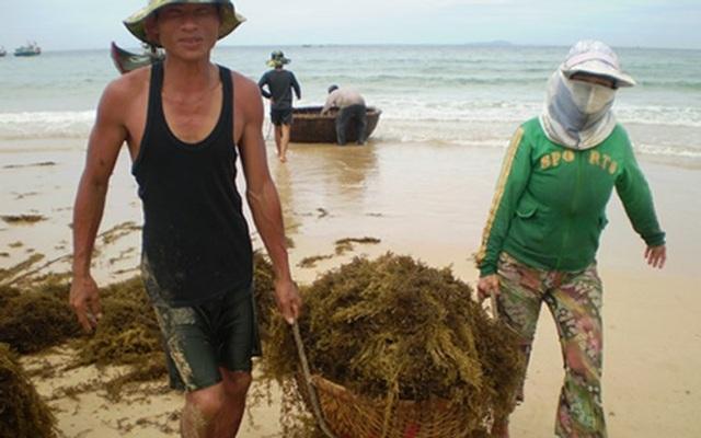 Những người không có điều kiện đi theo các tàu lớn khai thác hải sản vẫn có được thu nhập, nâng cao đời sống… (Ảnh: TTXVN)