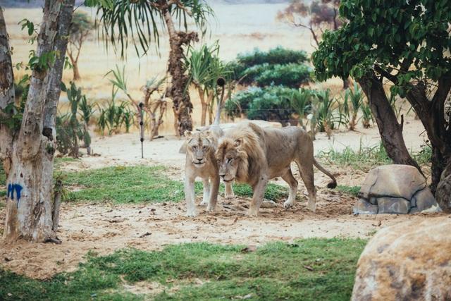 Có gì ở trong River Safari đầu tiên và duy nhất tại Việt Nam? - 11