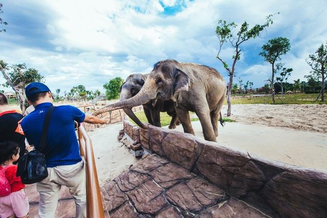 Có gì ở trong River Safari đầu tiên và duy nhất tại Việt Nam? - 4
