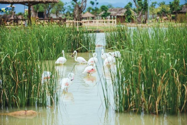Có gì ở trong River Safari đầu tiên và duy nhất tại Việt Nam? - 5