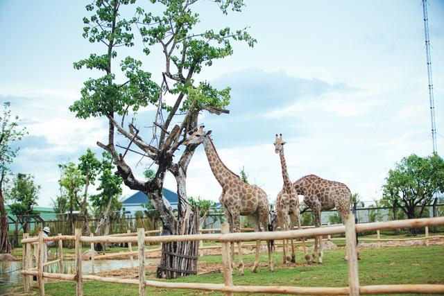Có gì ở trong River Safari đầu tiên và duy nhất tại Việt Nam? - 6