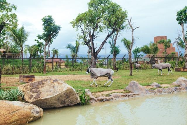 Có gì ở trong River Safari đầu tiên và duy nhất tại Việt Nam? - 8