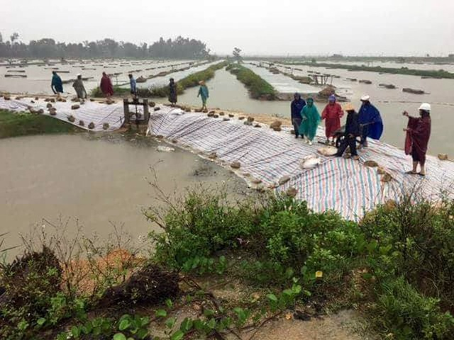 Khẩn cấp vá đê xung yếu bị vỡ trước khi bão Sơn Tinh đổ bộ - 5