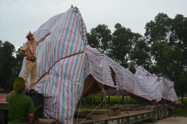 Cây đa sộp khủng đang bị tạm giữ ở Quảng Ngãi