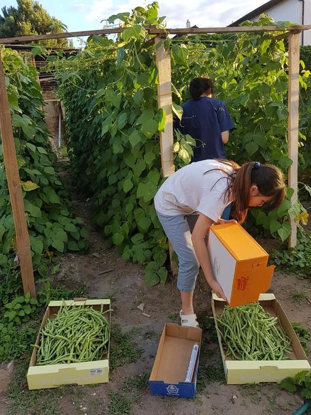 Chị Nguyễn Ngọc Anh sinh sống tại Cộng hòa Séc từ năm 2002. Hiện tại, chị đang theo học ngành Y khoa, trường ĐH Tổng hợp Sác-lơ. Cách đây 4 năm, chị mua được mảnh đất gần 1.000 m2. Chị quyết định dành gần 600 m2 đất để làm vườn, trồng rau ăn hằng ngày.