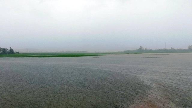 Nước ngập sâu do mưa lớn kéo dài.