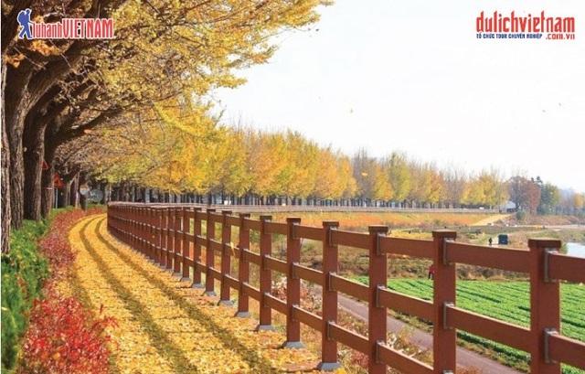 Những địa điểm ngắm mùa thu đẹp nhất tại Hàn Quốc, Nhật Bản - 1